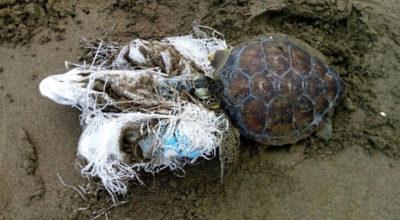 Akdeniz'deki canlılar plastikle boğuluyor!!!