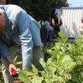 Rehabilite projesinde hasat zamanı