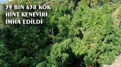 Kenevirle orman talanı!