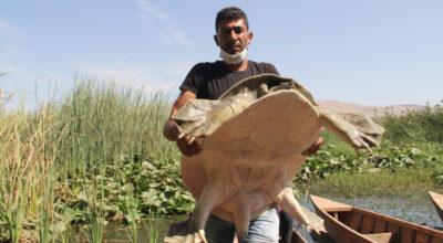 Yolun açık olsun Nil Kaplumbağa!