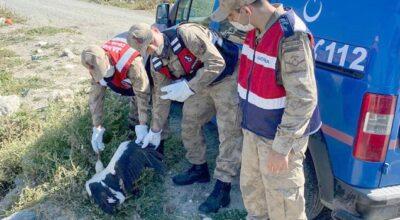Doğaya uzanan şefkat eli; Jandarma