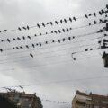 Elektrik tellerine kuşlar mı konar?
